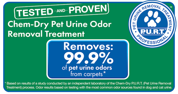 pet stain removal friendswood