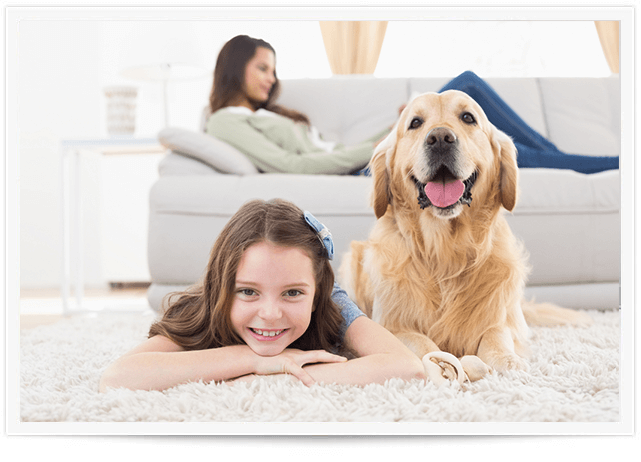 Pet Urine Removal Service in Friendswood