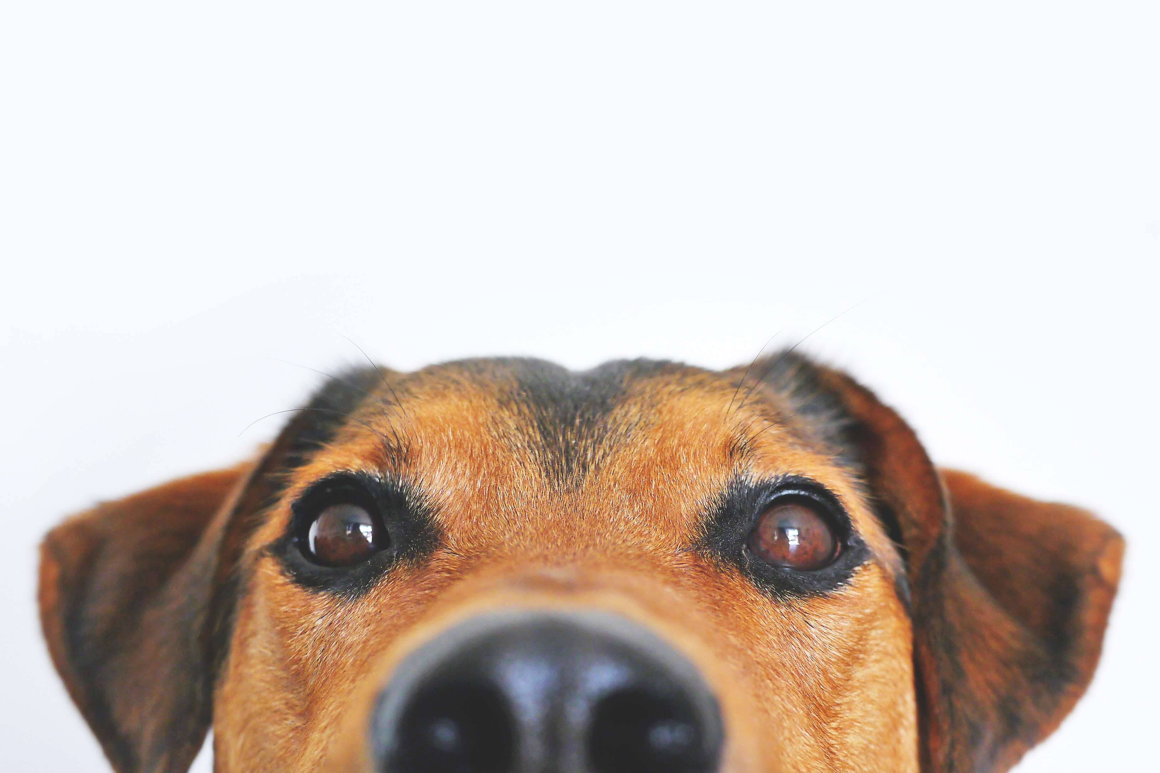 pet odor removal friendswood