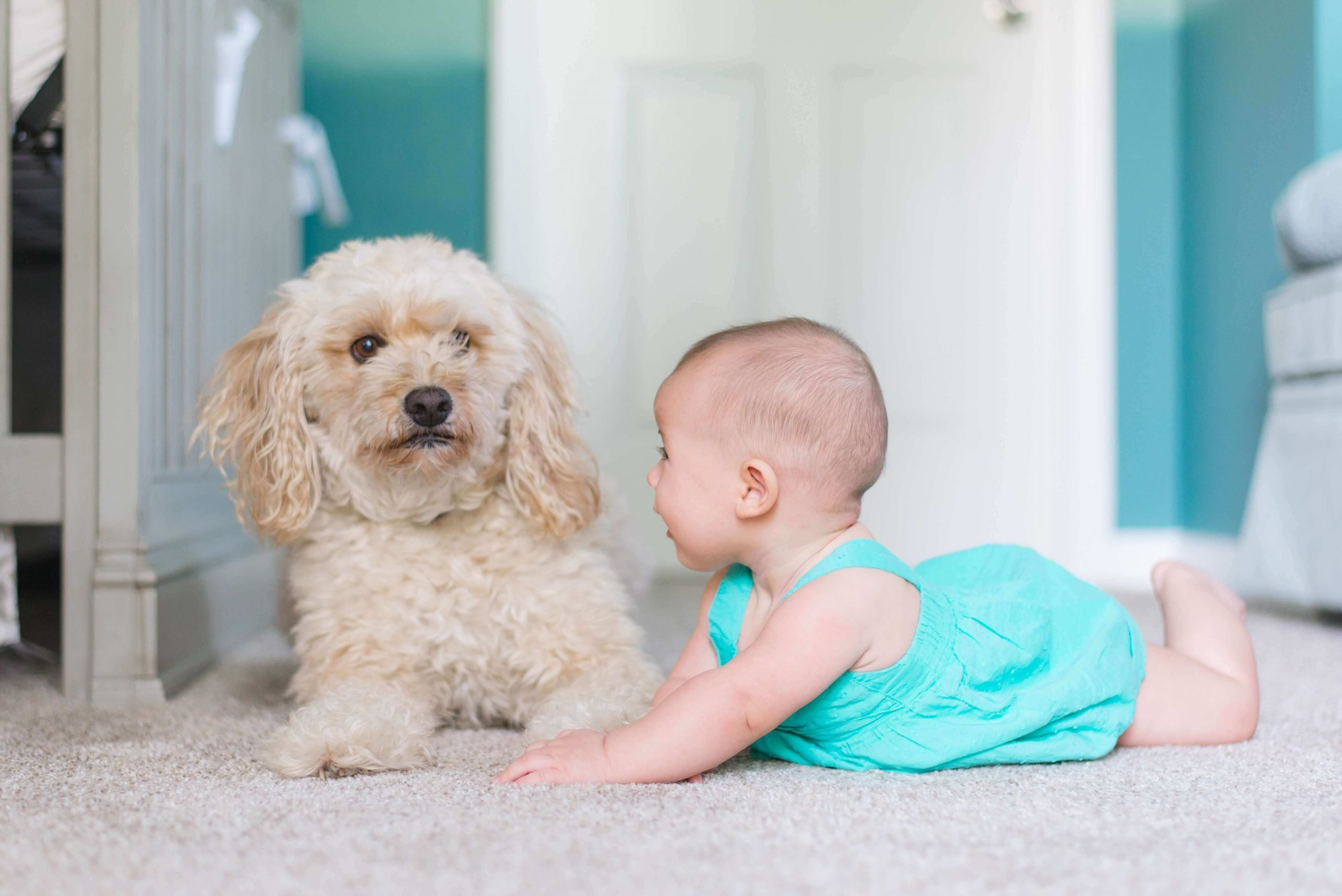 clear lake carpet cleaning